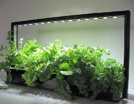 indoor gardening lights Parus LED mini farm system | parusgrowlight