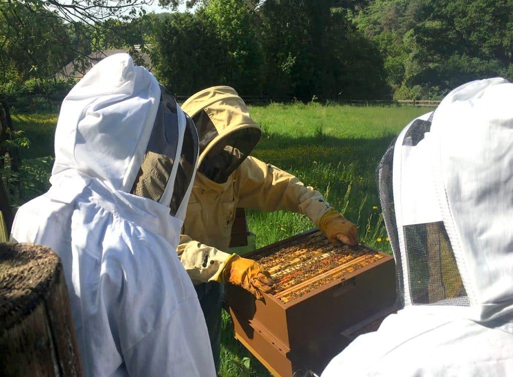 On dit toujours oui quand il s'agit de ruches