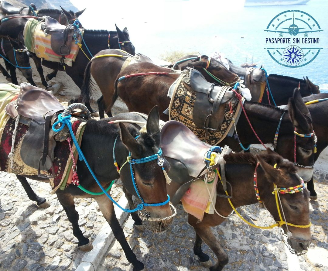 Burros de Santorini