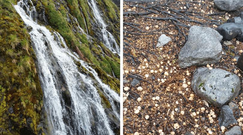 Cascada de Cóndores y texturas del bosque caminando al glaciar Balmaceda
