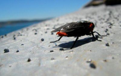 Tábanos en el sur de Chile: consejos para que no te arruinen el viaje