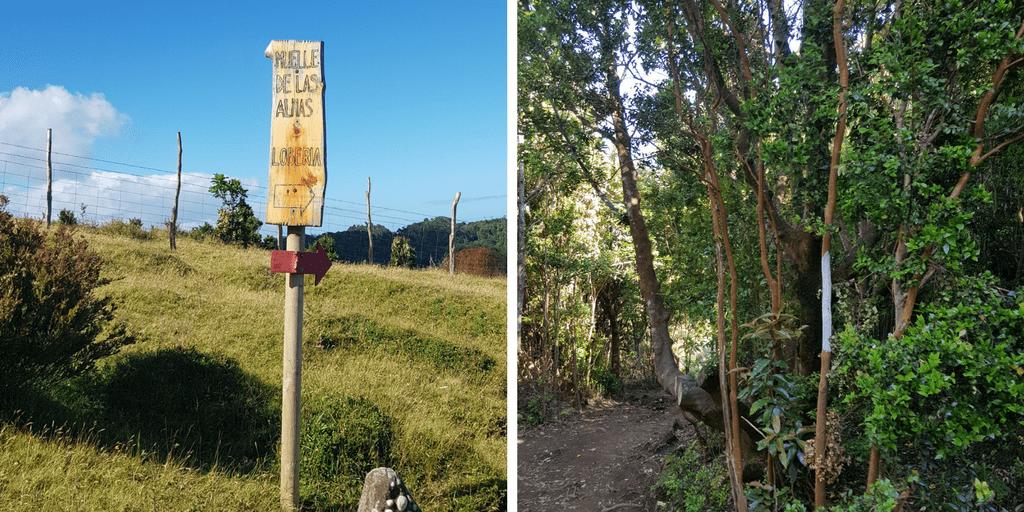 Cuando no sepas por donde seguir, sigue los árboles de tallo pintado o algunas flechas que aparecen en el camino
