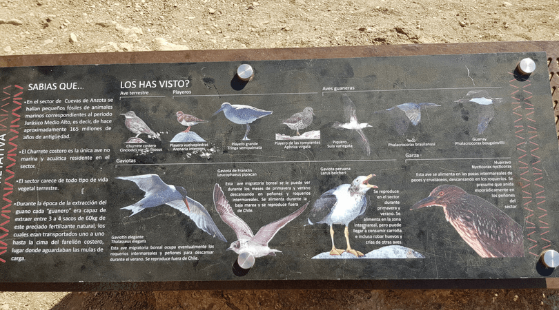 Además podrás identificar una amplia variedad de aves