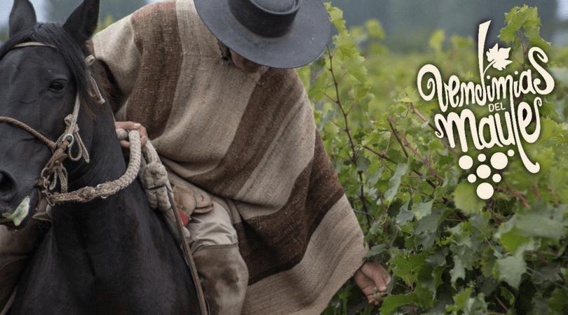 Gran Vendimia de Curicó: enoturismo y tradiciones en la región del Maule