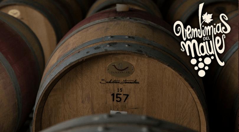 Por la cantidad de hectáreas de viñedos, la variedad de cepas que pueden encontrarse en el Maule es muy amplia