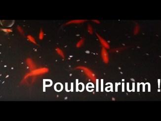 mon poubellarium