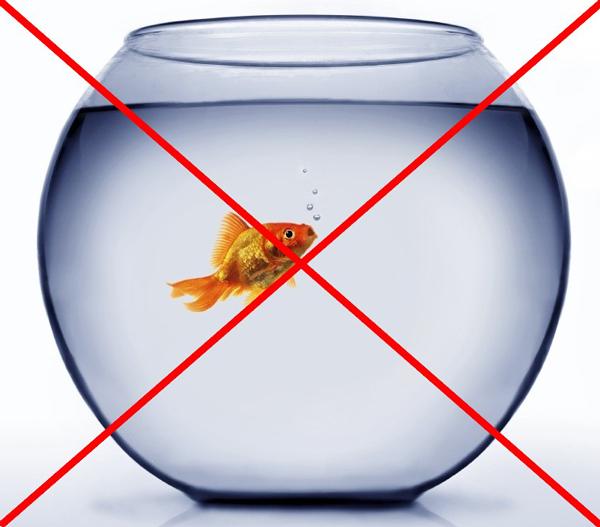 stop au poisson rouge en bocal