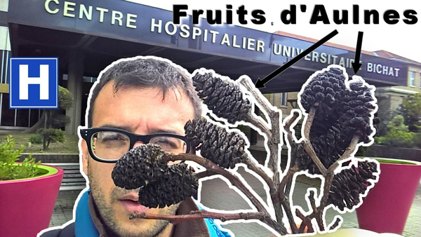 fruits aulnes