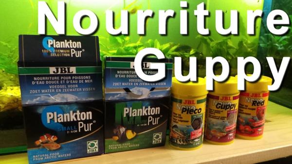 nourriture pour guppy