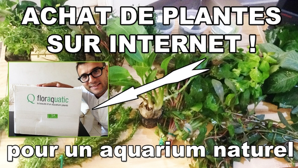 Avis boutique unboxing 1 re commande de for Commande de plantes