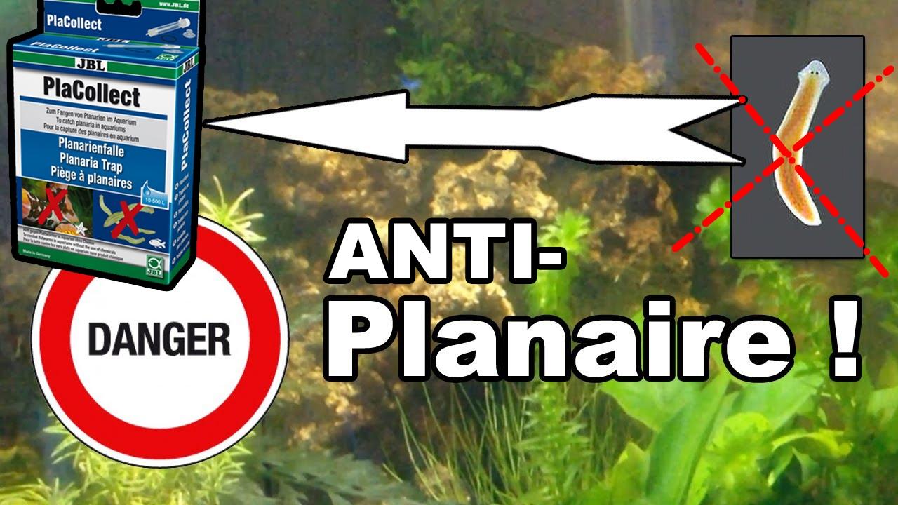 anti planaire !