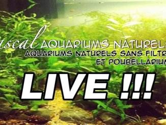 live Pascal Aquariums Naturels