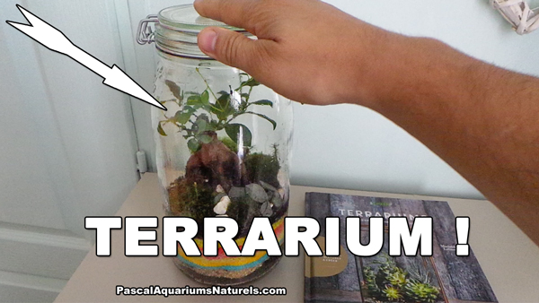 terrarium en pot DIY !