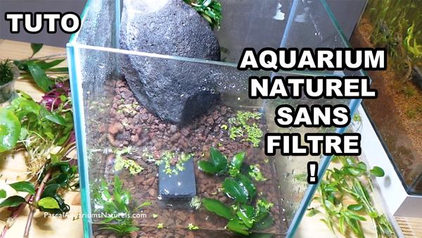 tuto hardscape de l'aquarium pour mon écrevisse CPO