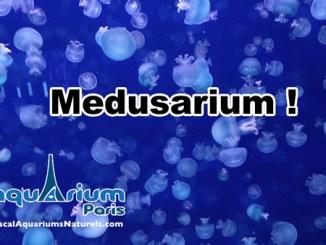 le medusarium du cineaqua !