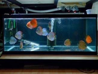 aquarium sans décor