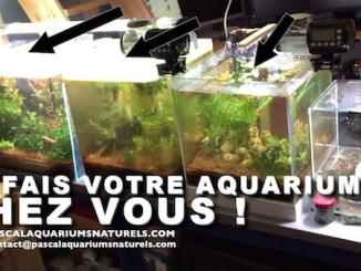 mes services à domicile pour faire votre aquarium sur Paris ou région proche