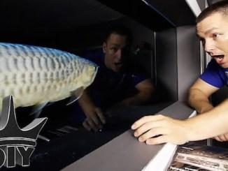 le youtubeur aquariophile : The King of DIY