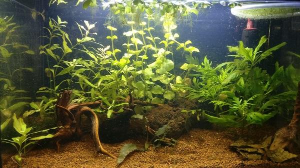 aquarium nano sans filtre