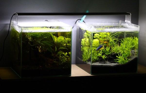 aquarium photo_aqua
