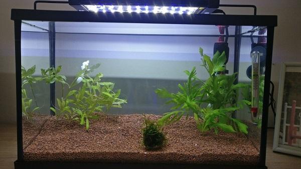 aquarium sans filtre