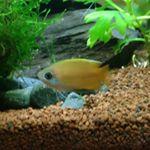 passionaquafish
