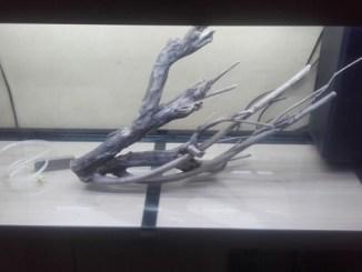Ici, une photo de mon aquarium avant d'être mis en eau...
