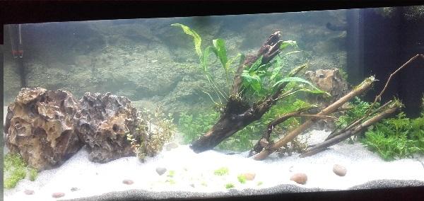 Aquarium asiatique mise en eau aquarium