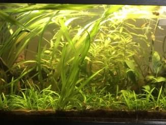 L'aquarium de fandaquarium !