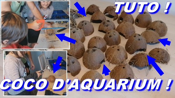 coco aquarium pascal aquariums naturels