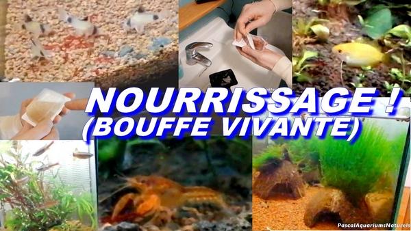 bouffe vivante poisson pascal aquariums naturels