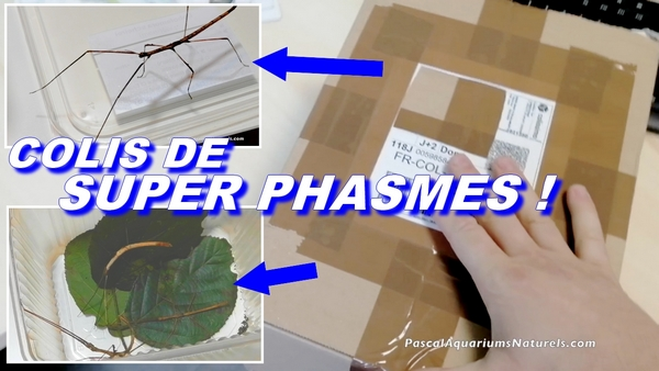 unboxing phasmes