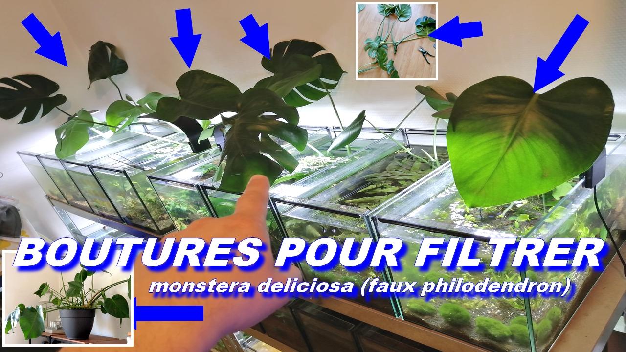 boutures filtration aquariums naturels
