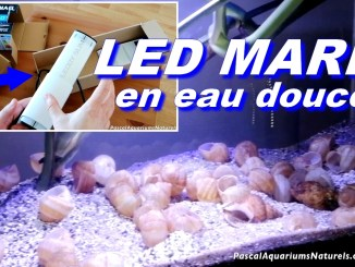 led marin eau douce