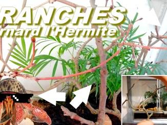 bienfaits des branches pour les Bernard l'Hermite