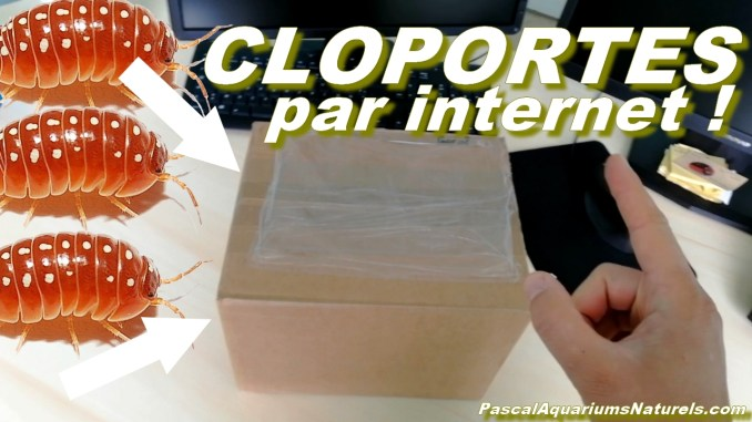 cloportes internet