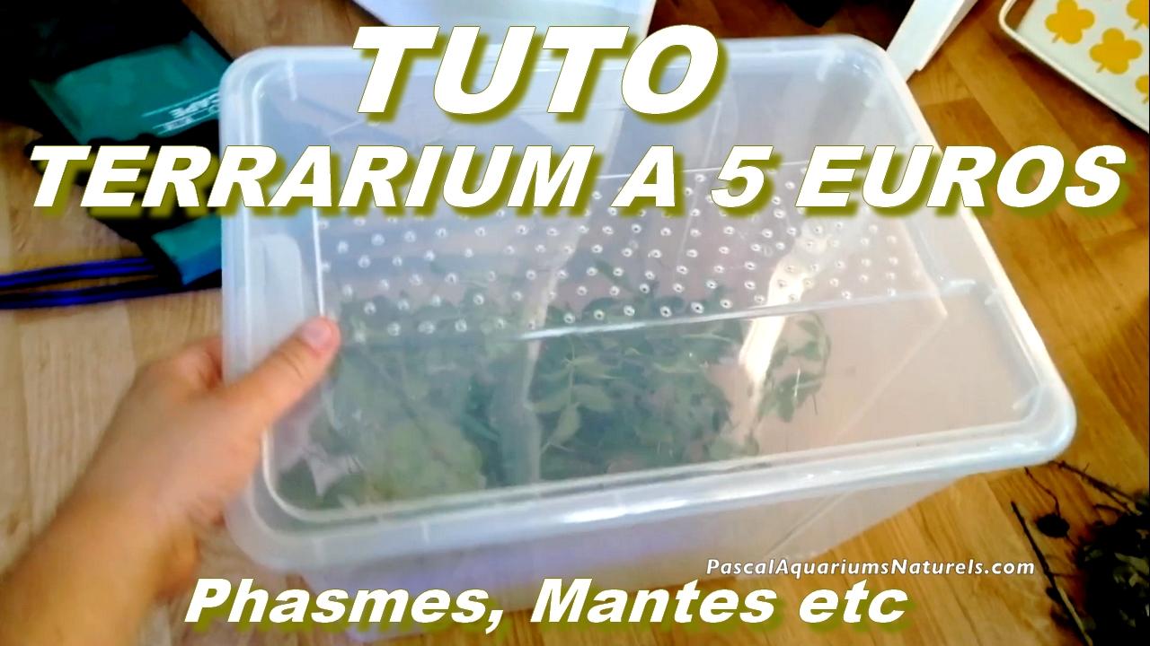 tutoriel terrarium à 5 euros