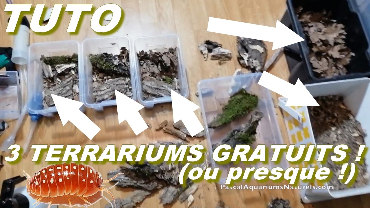 tutoriel 3 terrariums cloportes
