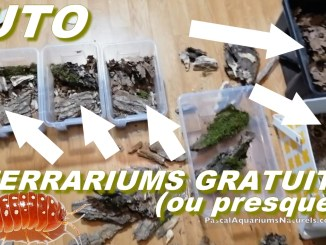 tutoriel 3 terrariums cloportes