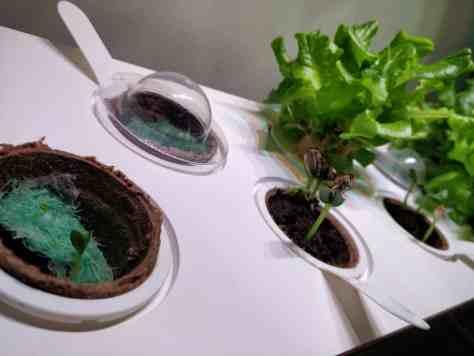 Plantes click grow serre