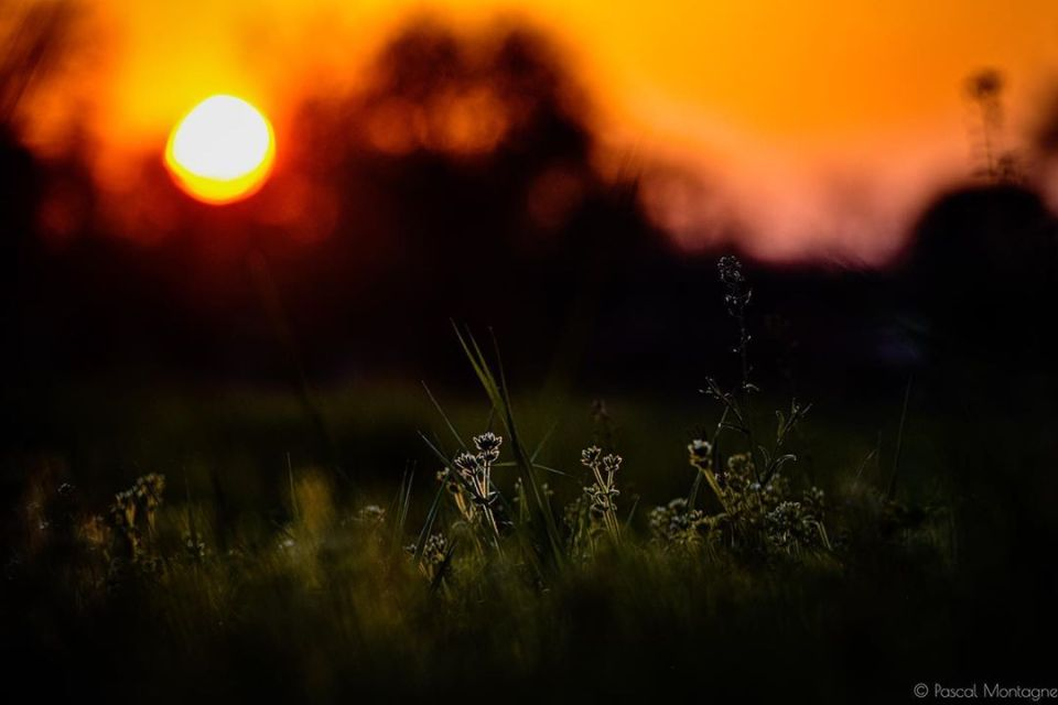 Confinement – day 10 – Sunset backlight on grass #sunset #evening #france #frenchcountry #backlight #colors #backlightphotography #sun #grass #ground #confinement #confinamento