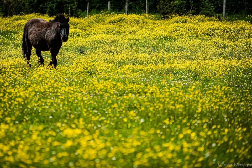 Confinement – day 49 – French country during confinement #confinement #covid_19 #coronavirus #country #france #flowers #yellow #horse #field #nature