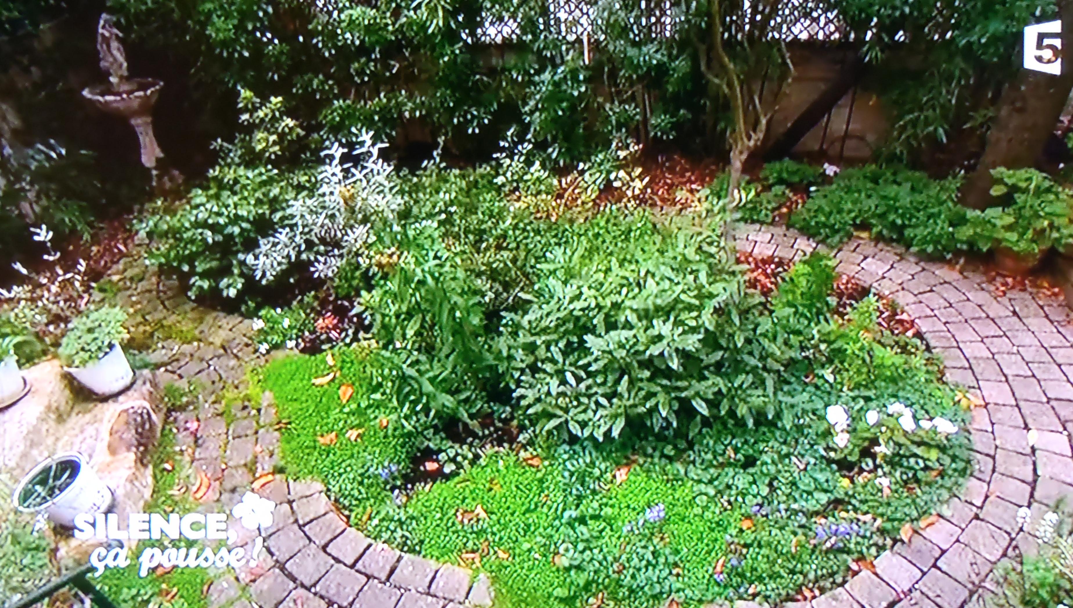 Un petit jardin Japonais Parisien   PAS DE PANIQUE ...