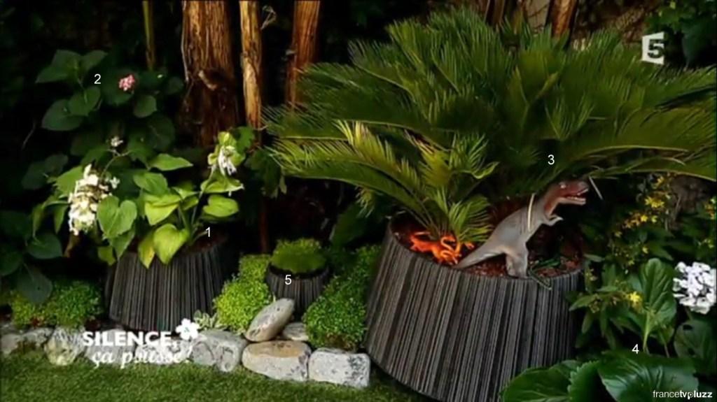 jardin ombre exotique 2