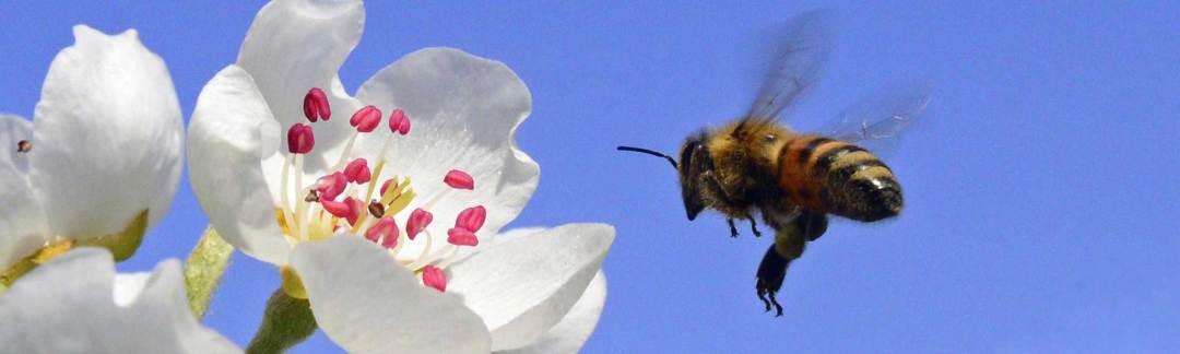 kalendarz wychowu matek pszczelich