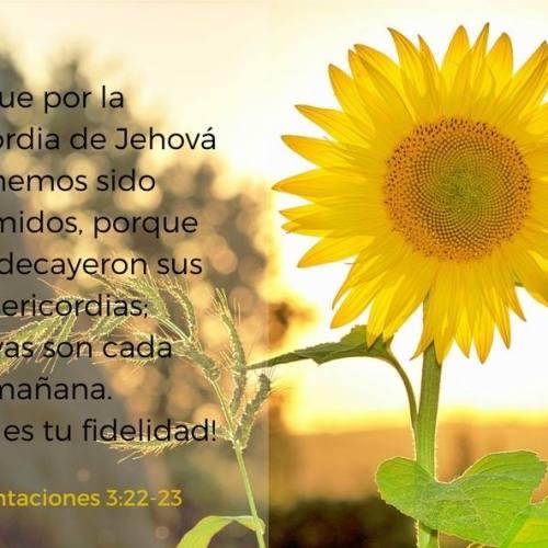 las misericordias de Dios se renuevan cada manana