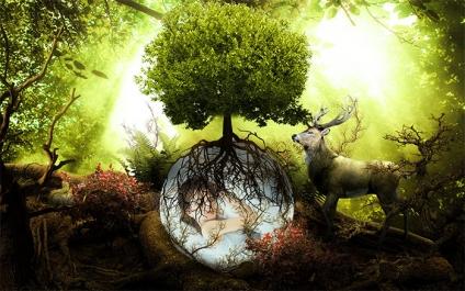 Photoshop CC / Amazing Forest  【幻想的な森林】
