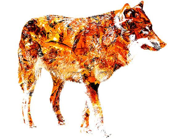 Wolf Outline Effect3 / 狼 - ヒスイ(黄土色)