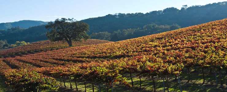 The Westside Wine Trail | Paso Robles Wineries