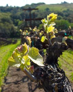 Ecluse Wines Vineyard